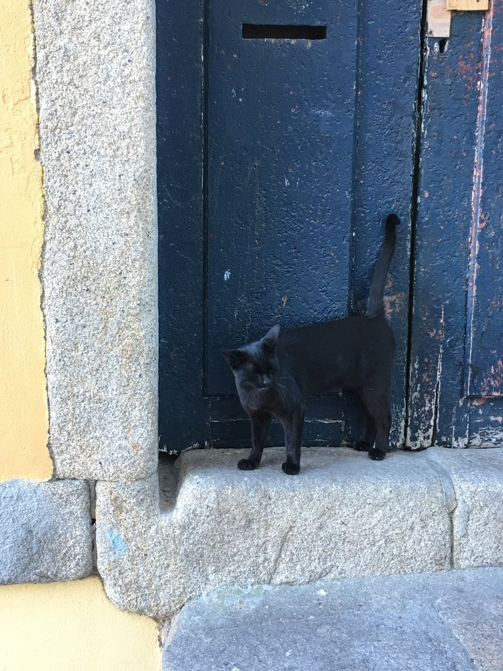 Cat-in-Portugal.jpg
