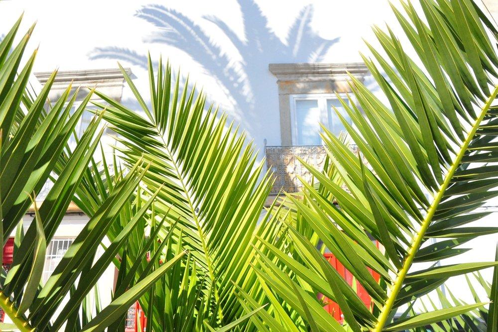 Palm-fringed.jpg