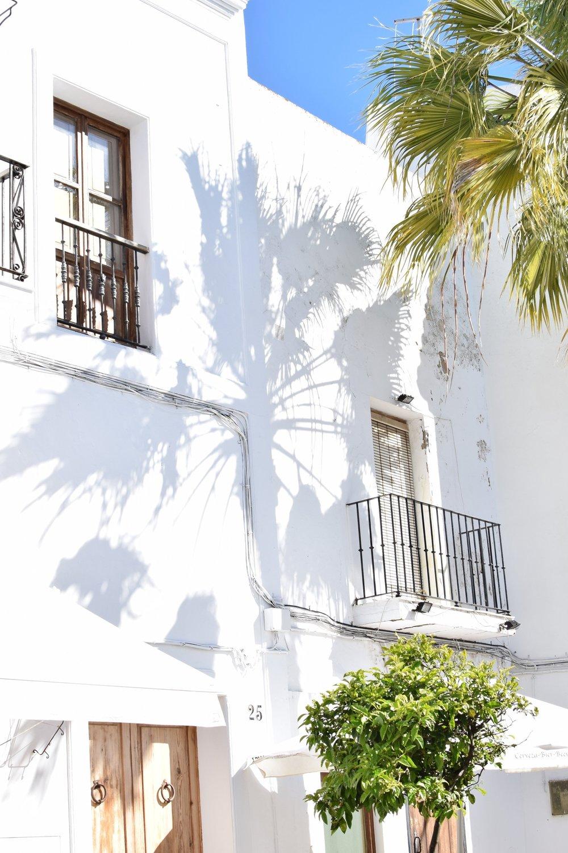 Palm-shadows-spain.jpg