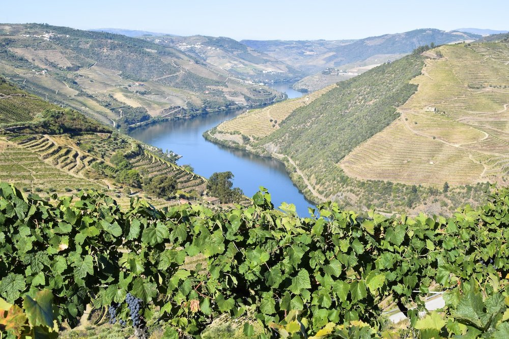 Wine-tasting-Douro-Valley-vines.JPG