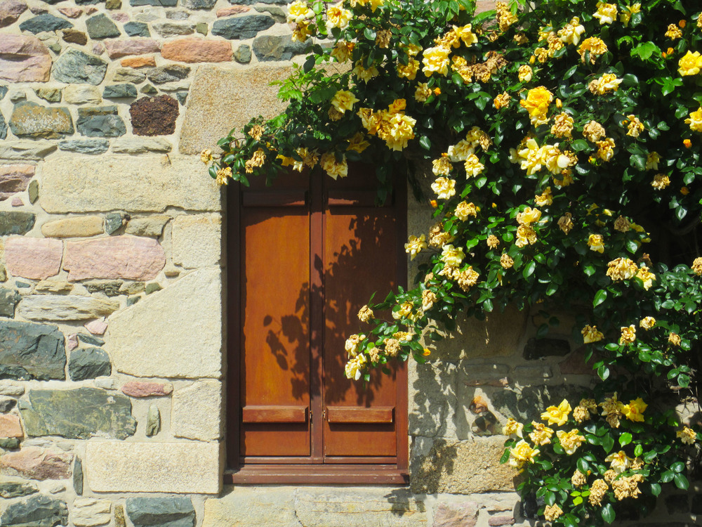 french-window-flowers.jpg