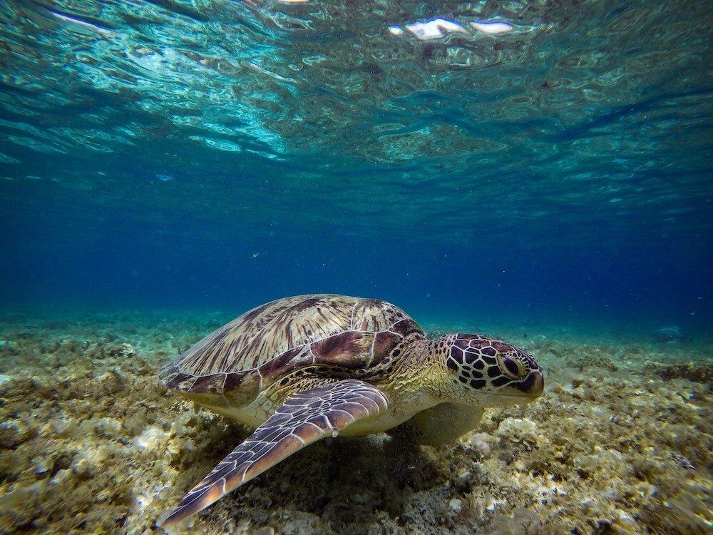 turtle-ocean.jpg