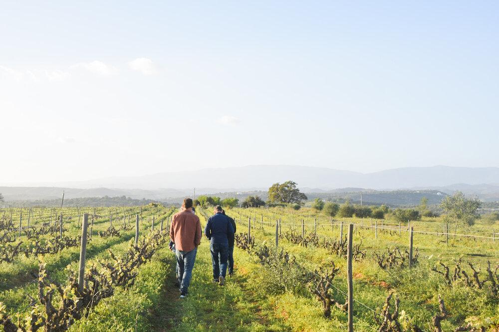 vineyard-algarve.jpg